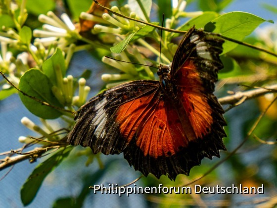 Butterfly Dome at Sagbayan Peak